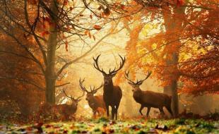Золотая осень - чудесная пора!